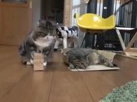 Jestem prostym kotełem...widzę pudełko to do niego wchodzę