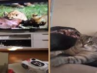 Horror dla kota - mało się nie zasrał ze strachu