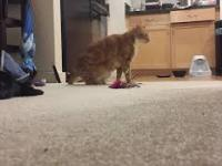 Moment, w którym kot orientuje się, że jego nowy współlokator jest ślepy