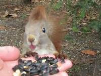 Wiewiórka i sikorki