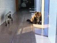 Przebiegły kotełkowy atak