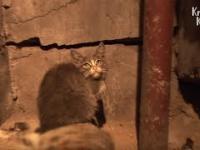 Troska kota nad zmarłą matką