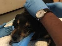 Porzucony starszy pies uratowany. Lepsze życie dzięki fundacji.