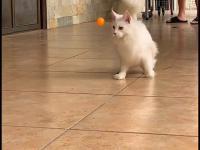 Kot to urodzony łowca