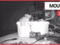 Mysz złapana na sprzątaniu w szopie ogrodowej