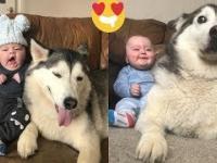 Husky od pierwszego dnia obiecywał, że będzie chronił synka