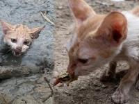 Ratowanie kotka z błotka