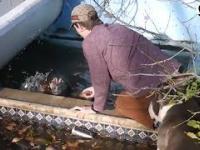 Pies zaczął się topić - dwa inne psy zorganizowały akcję ratunkową