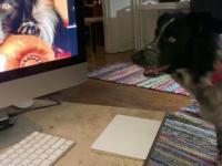 Pies, który sam przegląda zdjęcia na komputerze