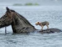 Zwierzęta które ratują życie innym zwierzętą