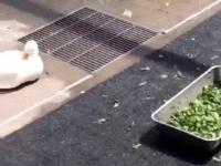 Tylko jedna kaczka wie, jak należy prawidłowo wypoczywać na wczasach