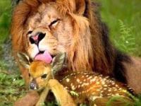 Przyjaźń wśród zwierząt