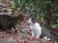 Koty walczą z autotune