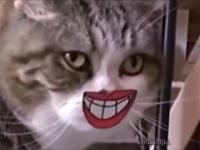Śmieszne koty kompilacja 1 2019