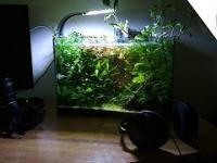 3 lata życia mojego 25l akwarium