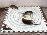 Pułapka na myszy w nieco ekstremalnym wydaniu