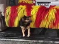 Pies na myjni