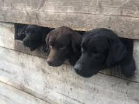 Ratujemy 40 psów z fabryki