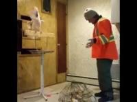 Jeszcze nie widziałeś, żeby papuga tak opierniczała człowieka