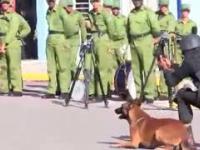 Niesamowite zdyscyplinowanie psa podczas prezentacji policyjnego szkolenia