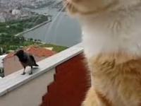 Ptak gada z kotem