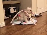 3 minuty psiej radości