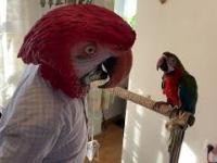 Największa papuga na świecie.