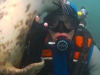 Foka to taki uroczy morski piesek