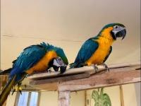 Papugarnia Rio w Lesznie. papugarnia