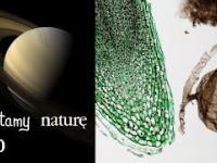 Czytamy naturę 30 | Saturn z bardzo bliska - Jak rośnie liść - Stary grzyb