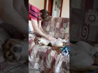 Mój gruby pies ma niesamowity bęben