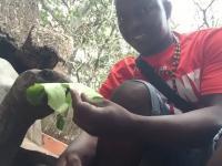 Nasz człowiek z Zanzibaru karmi żółwia