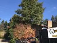 Ścinanie drzewa pełnego pyłków