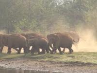 Radosne i szczęśliwe stadko słoni