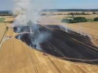 Pożar pola w Gościeszowicach - Mycelin