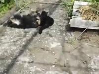 Ten kot wie, jak należy obezwładnić psa
