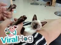 Koteczek szaleje na punkcie masażu jego łapek