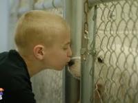 Ambitny cel - chłopak ratuje porzucone zwierzęta