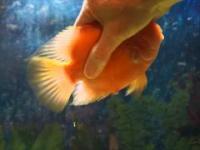 Niezwykła przyjaźń z rybą