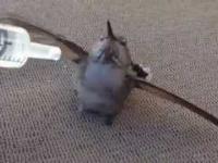 Ratowanie kolibra