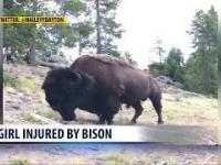 Bizon rzuca 9-latką w parku Yellowstone
