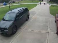 Pitbull atakuje dziecko. Sąsiad ratuje dziecko przejmując atak psa