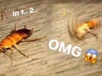 Mały pajączek upatruje sobie większe ofiary