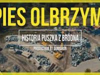 PIES OLBRZYM Z BRÓDNA URATOWANY - HISTORIA PUSZKA