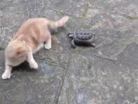 Kot vs krwiożercza bestia
