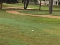 Ptasi mistrz gry w golfa