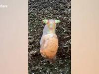 Ślimak, ślimak, pokaż rogi... WTF?