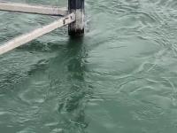 Efektowny skok do rzeki