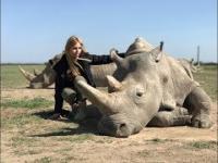 Ostatnie dwa białe nosorożce na świecie