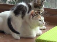 Małe koty odwalają sajgon